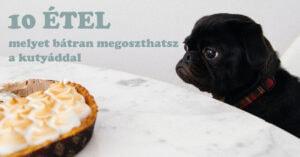 10 étel, melyet bátran megoszthatsz a kutyáddal