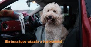 Biztonságos utazás a kutyáddal