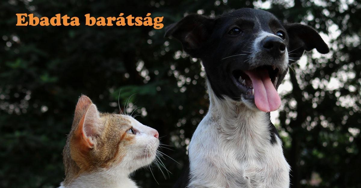 Read more about the article Ebadta barátság – Kutyák és macskák teljes harmóniában