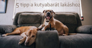 5 tipp a kutyabarát lakáshoz
