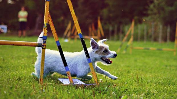 10 tipp kutyád egészségéért cikk