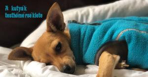 Mennyi a kutya ideális testhőmérséklete?