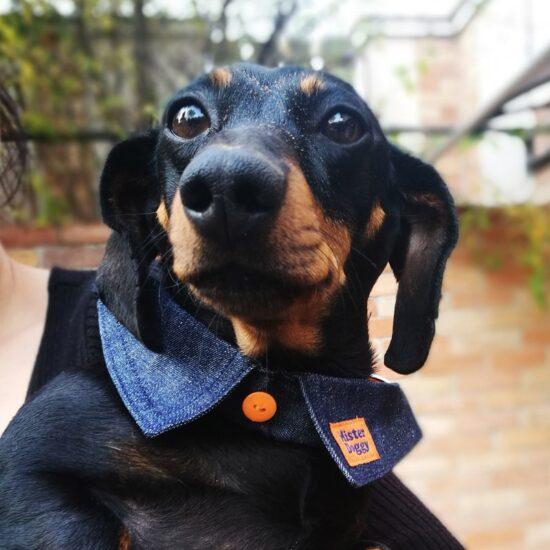 Mr. Doggy Nyakörv