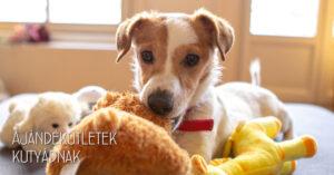 Hasznos ajandékötletek kutyádnak