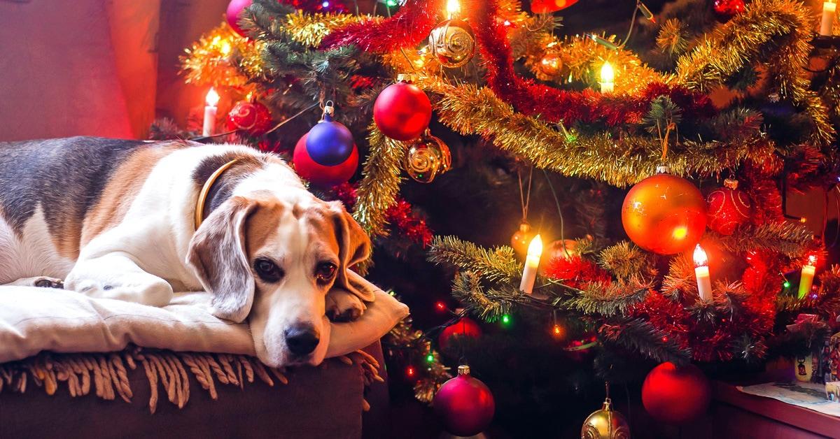 karácsonyi asztal kutyaszemmel