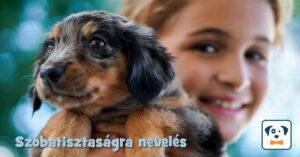 A kutya szobatisztaságra nevelése cikk